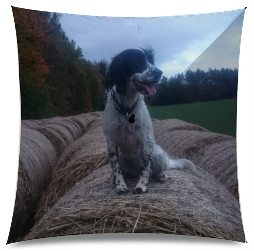 Spocker spaniel Medium Umbrella